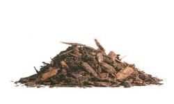 BruinsKwast-PinusSylvestris